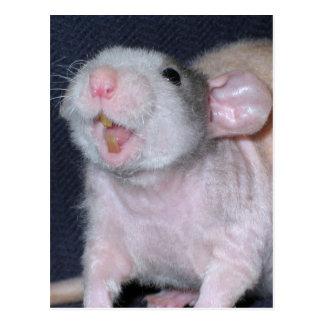 Cute Smile Rat Postcard