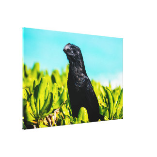 Cute Smooth-Billed Anis On A Natural Green Bush Canvas Print