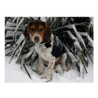 Cute Snoopy Beagle Puppy Dog in Snow Postcard