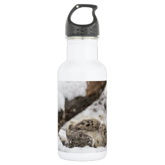 Cute Snow Leopard Plays in Snow 532 Ml Water Bottle