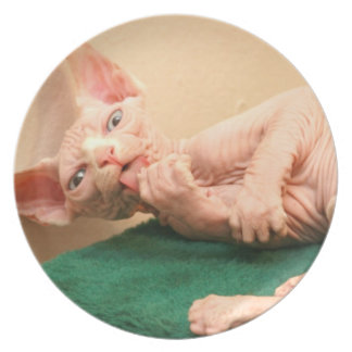 Cute sphinx cat plate