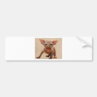 Cute sphynx kitten with tongue out bumper sticker
