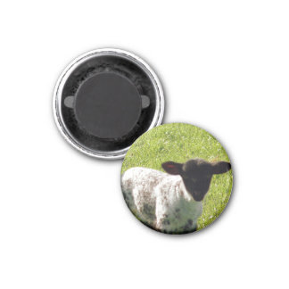 Cute Spring Lamb 1 Inch Round Magnet