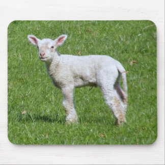 Cute Spring Lamb Mouse Pad