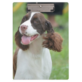 Cute Springer Spaniel Clipboard