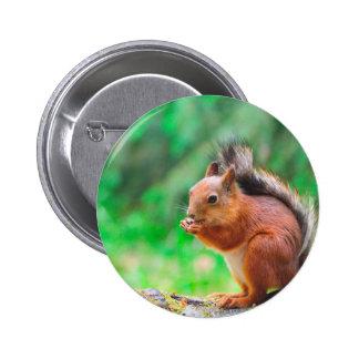 Cute squirrel 2 inch round button