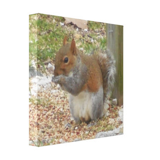 Cute Squirrel Canvas Art