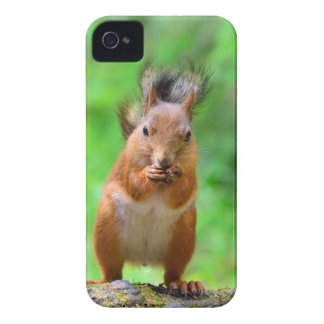 Cute squirrel Case-Mate iPhone 4 cases