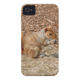 Cute Squirrel eating nuts iPhone 4 Case-Mate Case