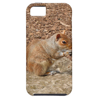 Cute Squirrel eating nuts iPhone 5 Case