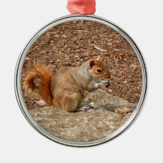 Cute Squirrel eating nuts Metal Ornament
