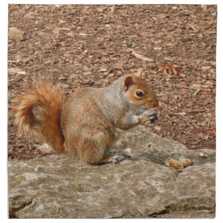 Cute Squirrel eating nuts Napkin