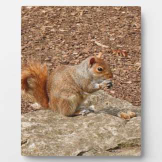 Cute Squirrel eating nuts Plaque