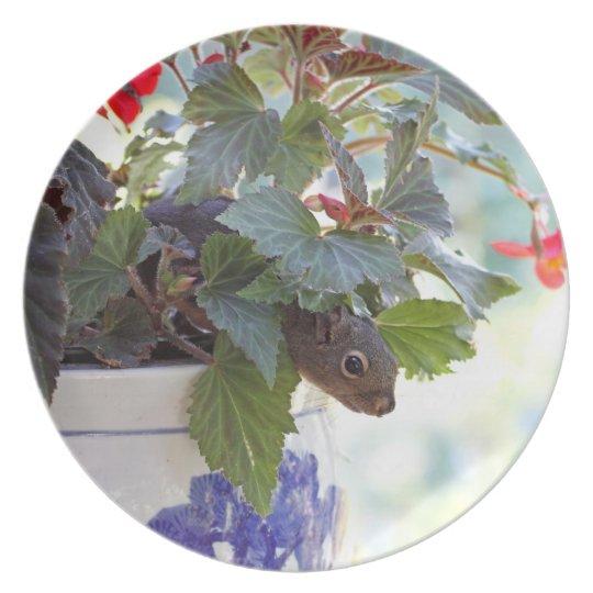Cute Squirrel in a Flower Pot Plate