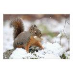 Cute Squirrel in Snow with Peanut Art Photo