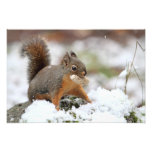 Cute Squirrel in Snow with Peanut Photo Art