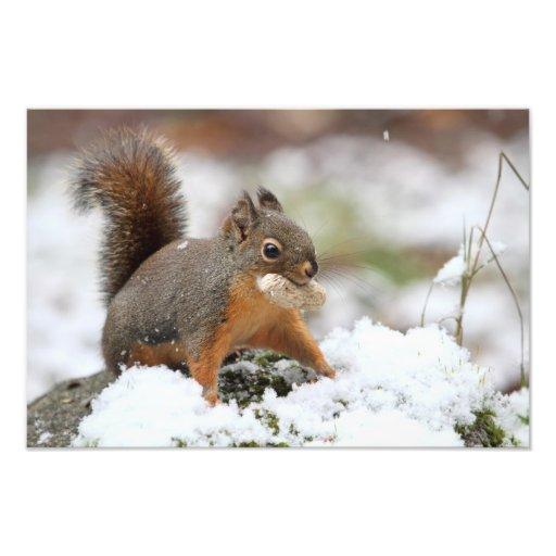 Cute Squirrel in Snow with Peanut Photo Art