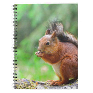 Cute squirrel note books