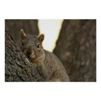cute squirrel on a Tree- love of animal and nature Poster