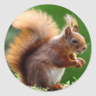 Cute Squirrel Picture Classic Round Sticker