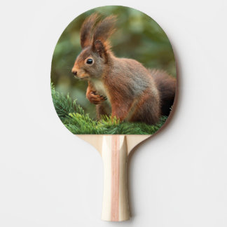 Cute squirrel ping pong paddle