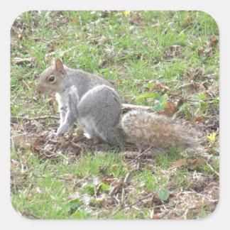 Cute Squirrel Scratching Square Sticker