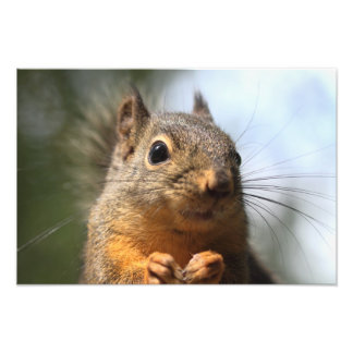 Cute Squirrel Smiling Closeup Photo