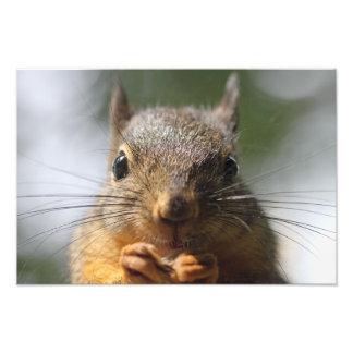 Cute Squirrel Smiling Photo