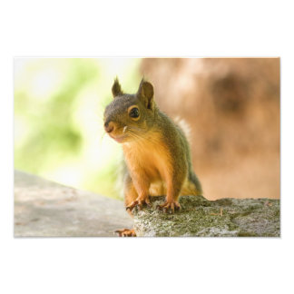Cute Squirrel Smiling Photograph
