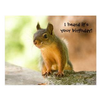 Cute Squirrel Smiling Post Card