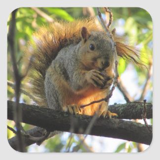 Cute Squirrel with Nut in Tree Stickers