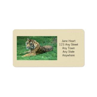 Cute Sumatran Tiger In The Grass Avery Label