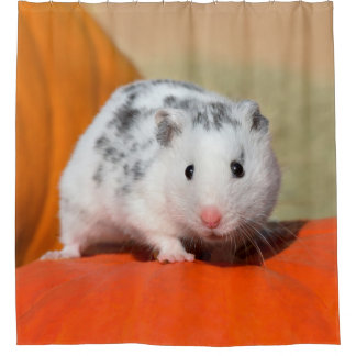 Cute Syrian Hamster White Black Spotted Funny Pet