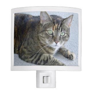 Cute Tabby Cat Photo Nite Lights