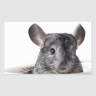 Cute Teacup Chinchilla Grey Sticker