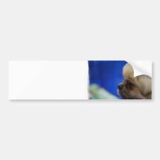 Cute Tibetan Spaniel Bumper Sticker