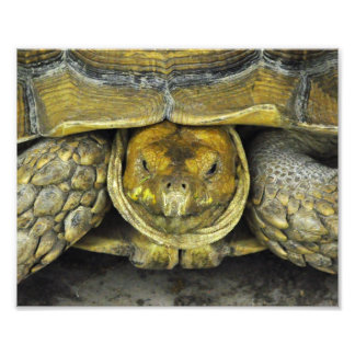 Cute Tortoise Hello Poster Photographic Print
