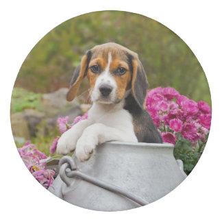 Cute Tricolor Beagle Dog Puppy in a Milk Churn :: Eraser