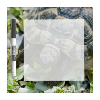 Cute Turtle Dry-Erase Board