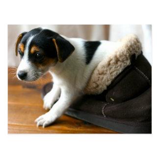 Cute Ugg Puppy Postcard (Jack Russell Terrier)