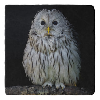 Cute ural owl trivet
