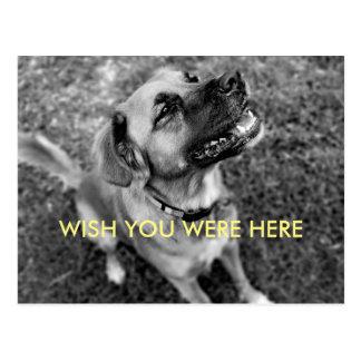 Cute Vintage Dog Wish You Were Here Postcard
