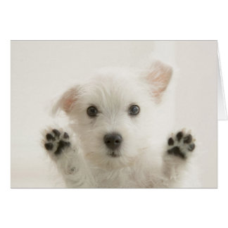 Cute Westie Puppy Card