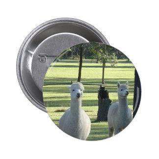 Cute White Alpaca Boys In Green Meadow Full Of Tre Pinback Buttons