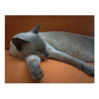 Cute White And Grey Aquiles Cat Sleep On Brown Coa Postcard