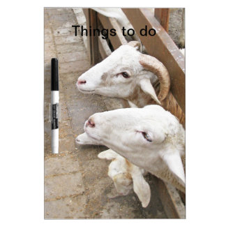 Cute white billy goats Dry-Erase boards