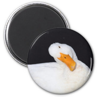 Cute, White Duck on magnet