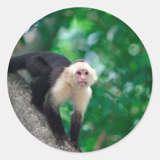 Cute white faced capuchin monkey Nicaragua Round Sticker
