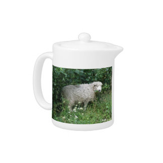 Cute White Fluffy Sheep Eating Teapot