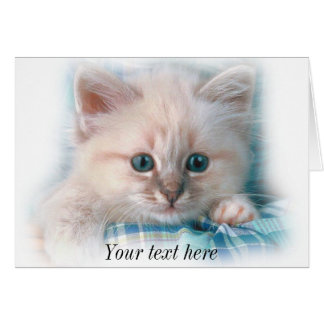 cute white kitten with gorgeous blue eyes card